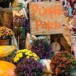 Pumpkinpalooza Spooks Main Street on October 9